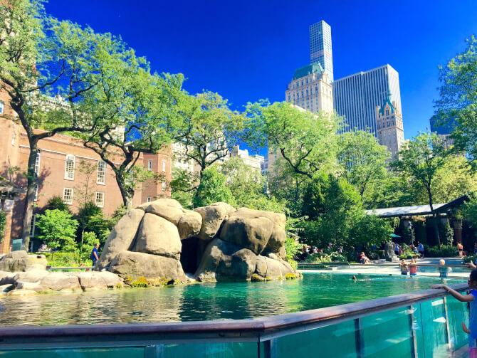 Top 20 things to do in New York: A pool in the Central Park Zoo