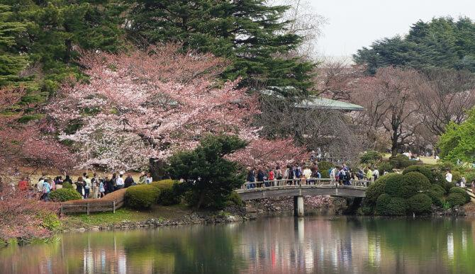 Top 20 things to do in Tokyo: The beauty of the Shinjuku Gyoen