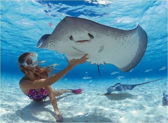 Things to do in Bora Bora:Shark and Ray feeding