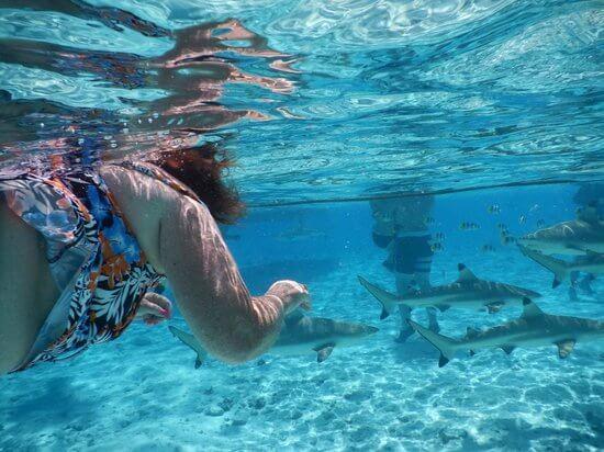 Things to do in Bora Bora:Bora Bora Lagoonarium