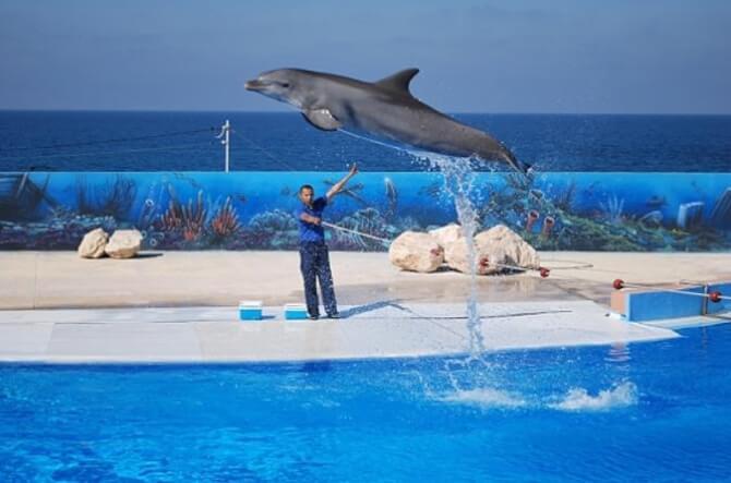things to do in Malta:Mediterraneo Marine Park