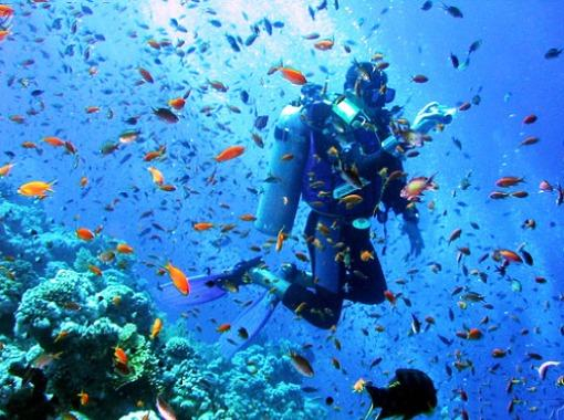 things to do in Malta:Diving or Snorkeling