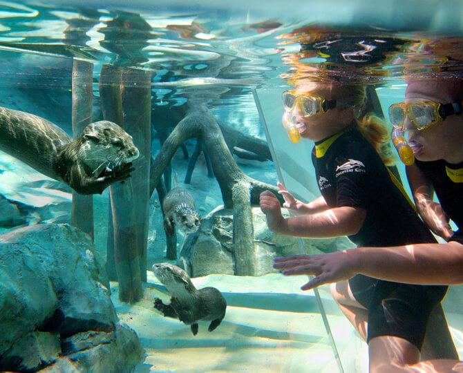things to do in orlando:Discovery Cove