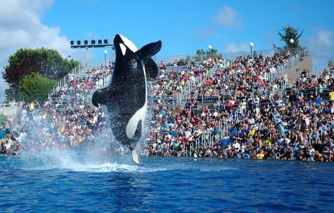 things to do in orlando:SeaWorld