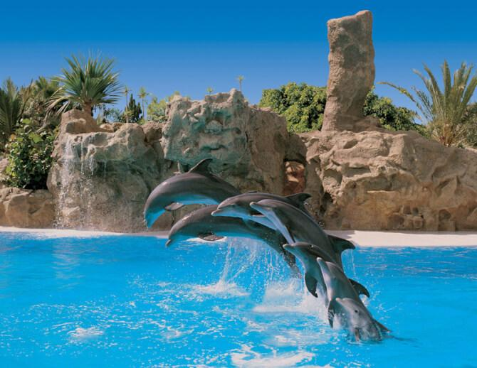 things to do in tenerife:Loro Parque