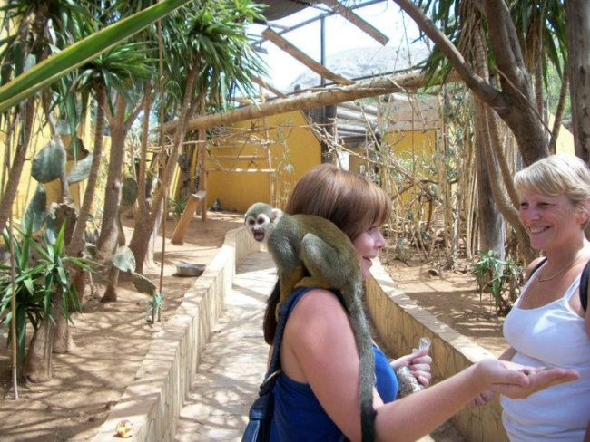 things to do in tenerife:Monkey Park