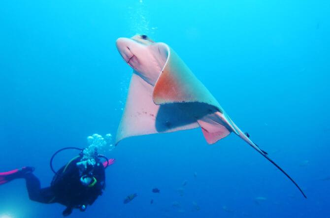 things to do in tenerife:Bottom Diving