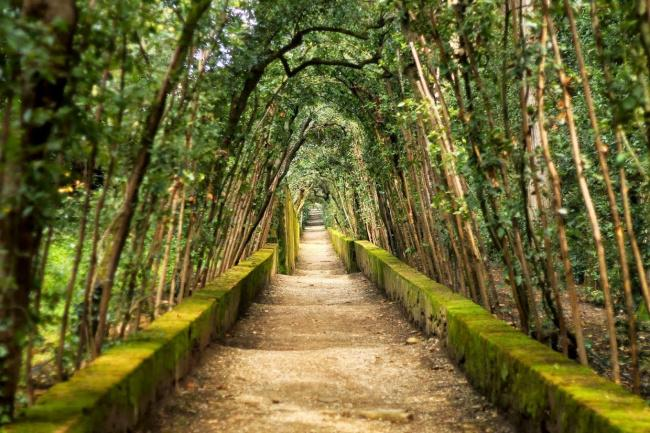 Top 20 things to do in Florence: Beautiful walkway at the Boboli Gardens