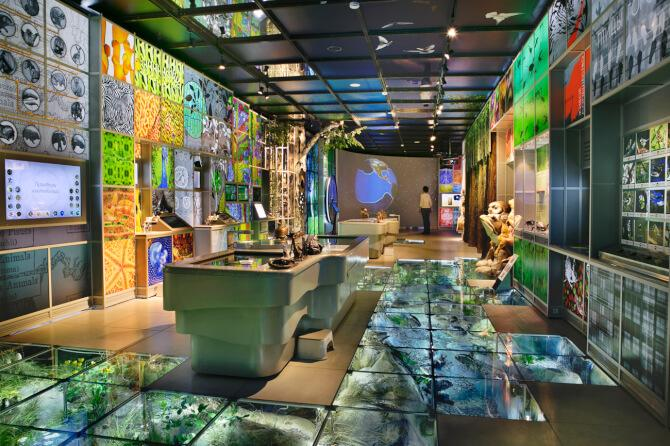 Top 20 things to do in Moscow: One of the more modern exhibitions at the State Darwin Museum