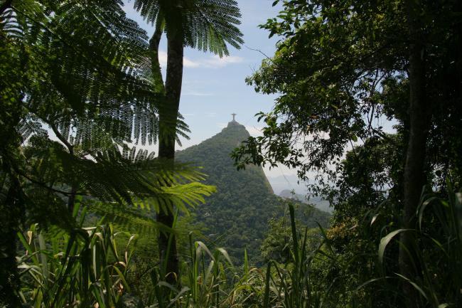 Top 20 things to do in Rio de Janeiro: Tijuca National Park
