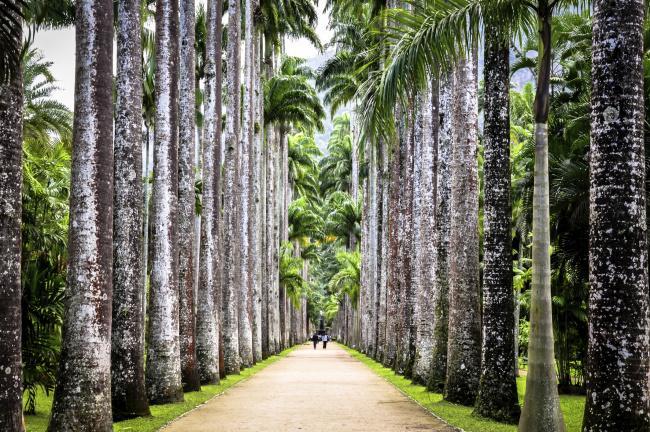 Top 20 things to do in Rio de Janeiro: Botanical Garden of Rio