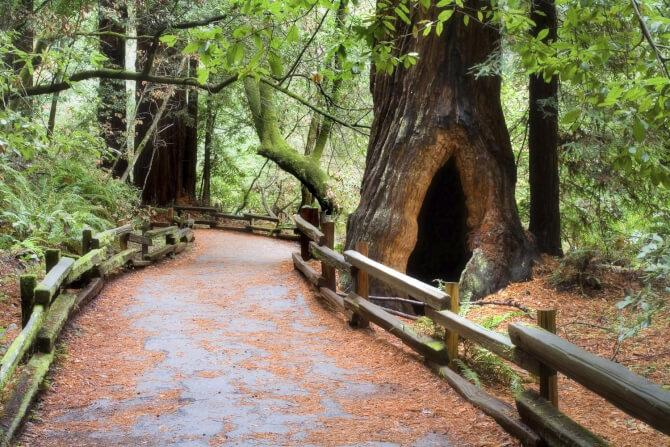 Top 20 things to do in San Francisco: The forest of the Muir Woods National Monument