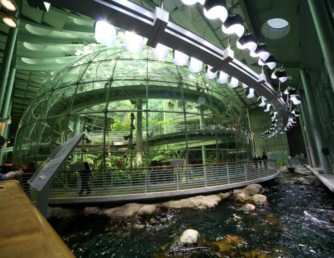 Top 20 things to do in San Francisco: Part of the rainforest exhibit at the California Academy of Sciences