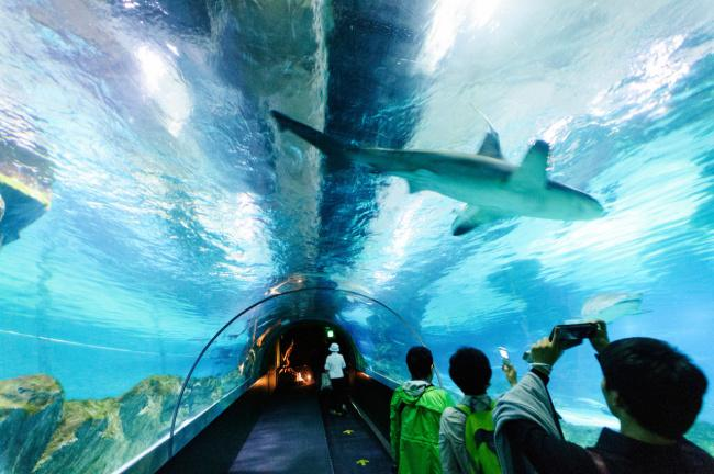 things to do in seoul:Coex Aquarium