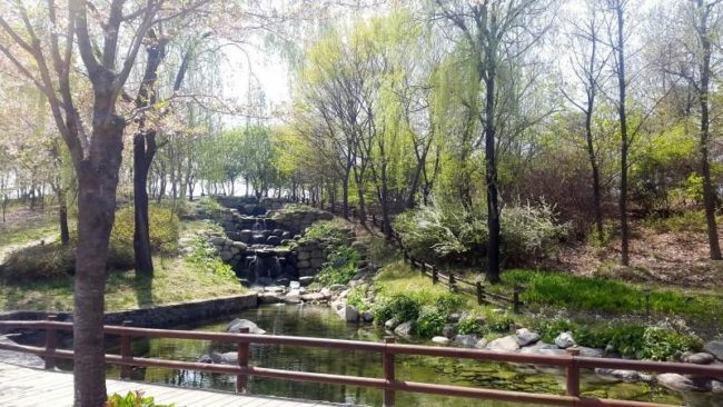 things to do in seoul:Seoul Forest