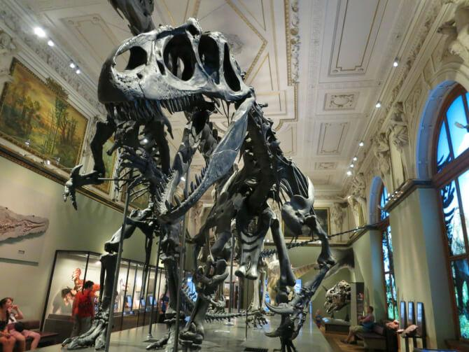 Top 20 things to do in Vienna: The skeletons of dinosaurs in the Naturhistorisches Museum