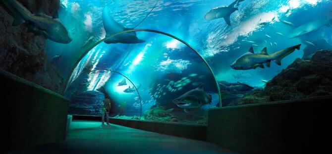 Top 20 things to do in Bangkok: Siam Ocean World - High on the list of things to do in Bangkok
