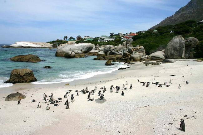 Top 20 things to do in Cape Town: Boulders Beach