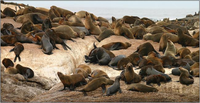 Top 20 things to do in Cape Town: Seal Island