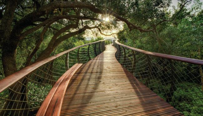 Top 20 things to do in Cape Town: Kirstenbosch Centenary Tree Canopy Walkway