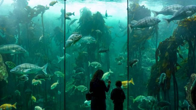 Top 20 things to do in Cape Town: Two Oceans Aquarium