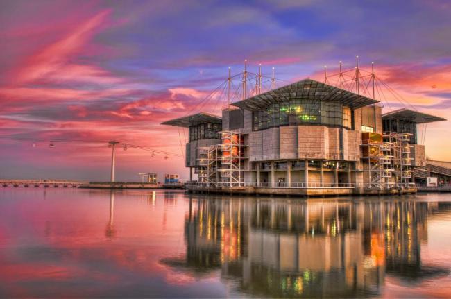Top 20 things to do in Lisbon: Lisbon Oceanarium