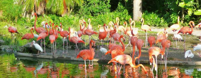 Top 20 things to do in Miami: Zoo Miami