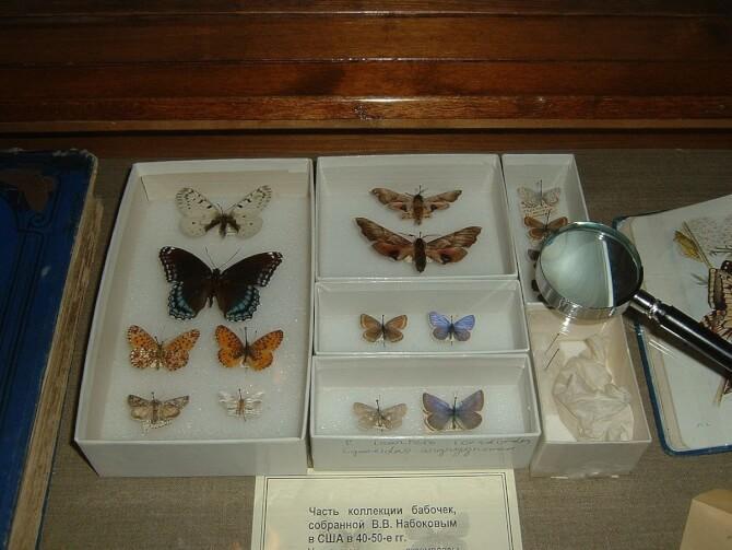 Top 20 things to do in Saint Petersburg: Nabokov's Butterflies