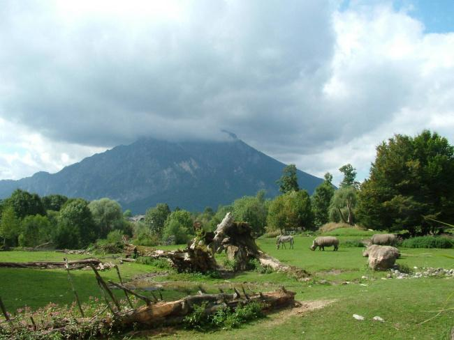 Top 20 things to do in Salzburg: Salzburg Zoo