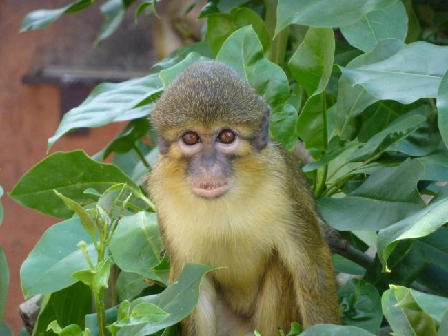 things to do in tenerife: monkey park