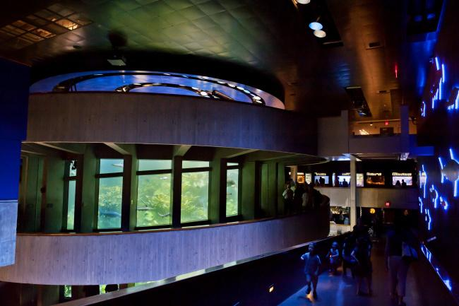 Top 20 things to do in Boston: New England Aquarium