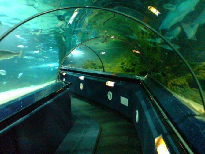 Top 20 things to do in Auckland: Kelly Tarlton's Sea Life Aquarium
