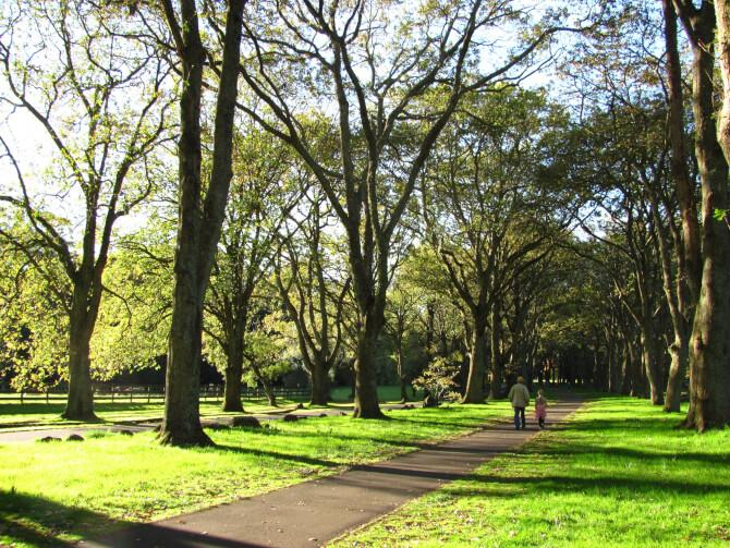 Top 20 things to do in Auckland: Cornwall Park