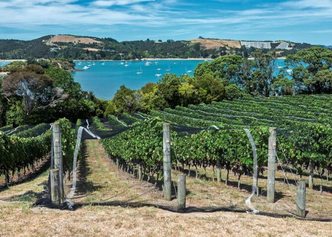 Top 20 things to do in Auckland: Waiheke Island