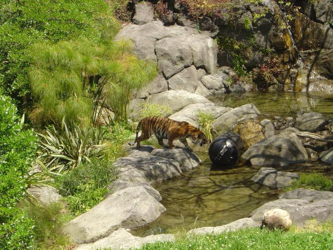 Top 20 things to do in Auckland: Auckland Zoo