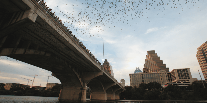 Top 20 things to do in Austin: The Bats of Austin
