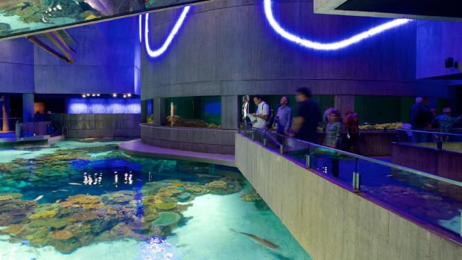 Top 20 things to do in Baltimore: National Aquarium
