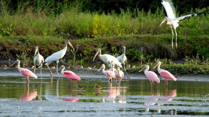 Top 20 things to do in Costa Rica: Caño Negro Wildlife Refuge
