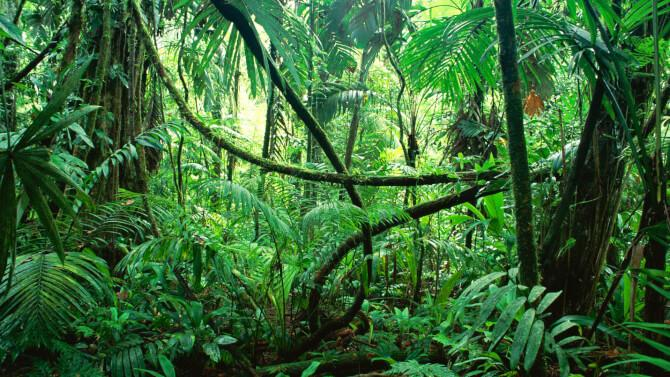 Top 20 things to do in Costa Rica: Corcovado National Park