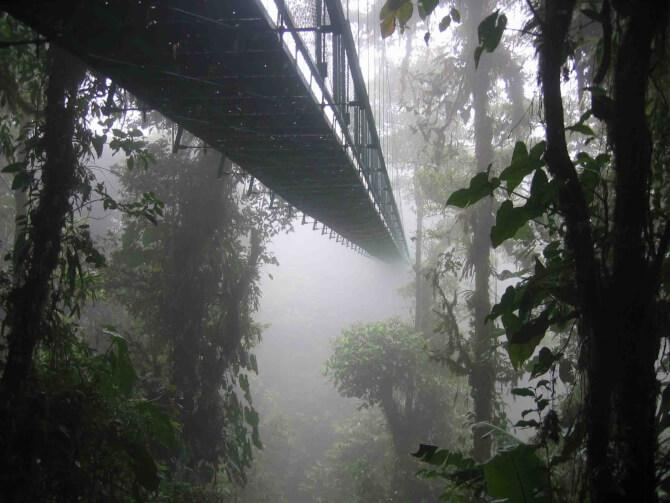 Top 20 things to do in Costa Rica: Monteverde Cloud Forest Reserve