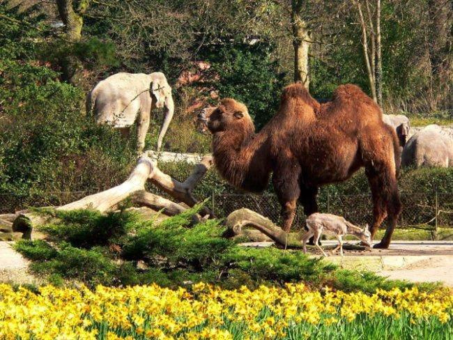 Top 20 things to do in Hamburg: Tierpark Hagenbeck