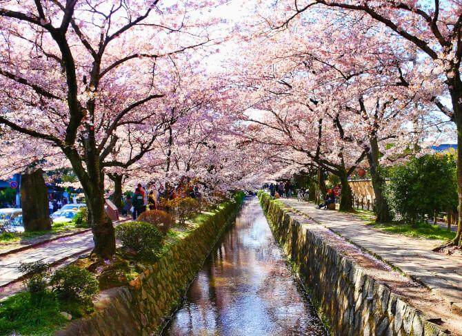 Top 20 things to do in Kyoto: Philosopher's Walk
