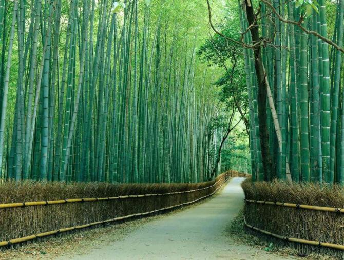 Top 20 things to do in Kyoto: The pathways of the Sagano Bamboo Forest