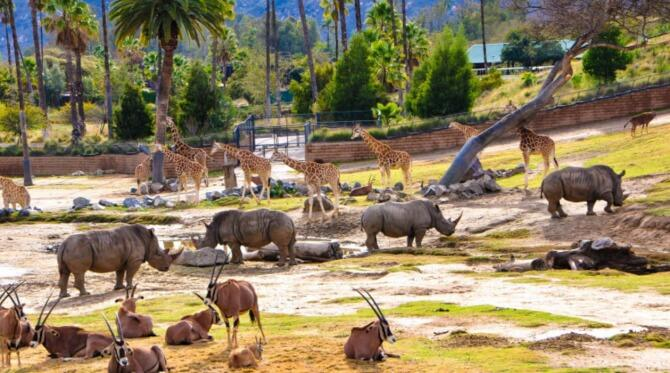 Top 20 things to do in San Diego: San Diego Safari Park