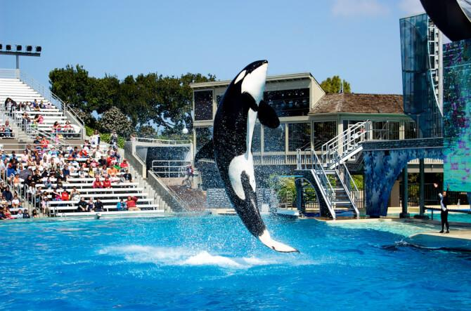 Top 20 things to do in San Diego: SeaWorld San Diego