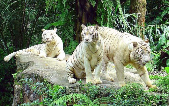 Top 20 things to do in Singapore: Singapore Zoo