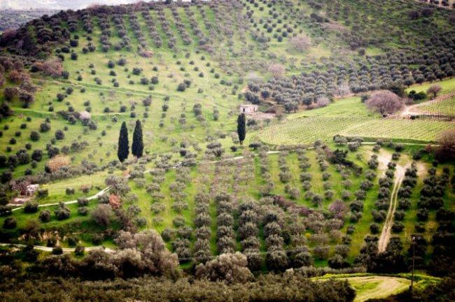 Top 20 things to do in Crete: Cretan Olive Oil Farm