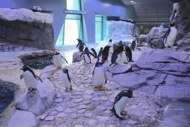 Top 20 things to do in Detroit: Detroit Zoo