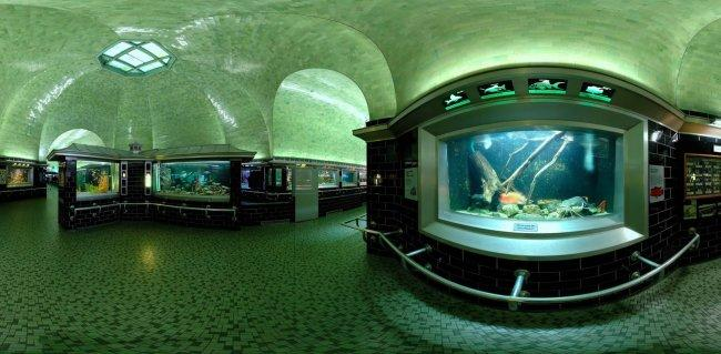 Top 20 things to do in Detroit: Belle Isle Aquarium