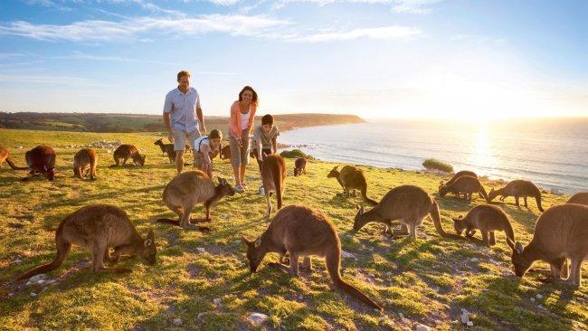 Top 20 things to do in Adelaide: Kangaroo Island